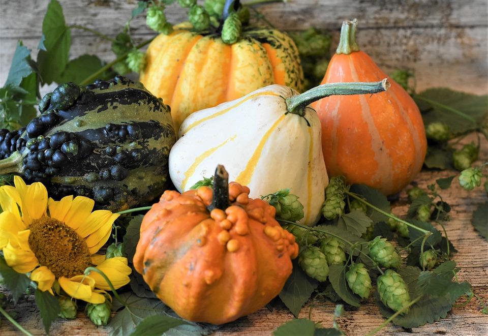 Dynie ozdobne – zasady uprawy oraz rodzaje