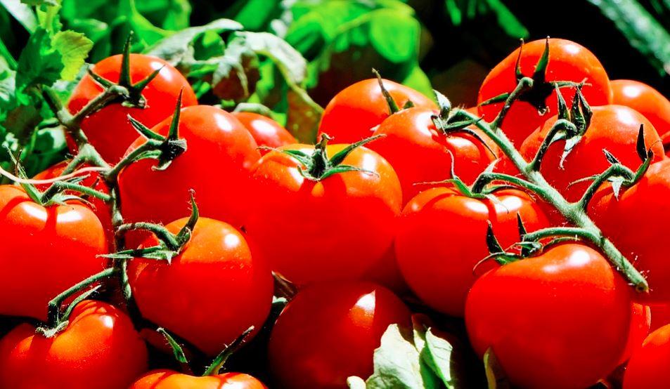 Opryski pomidorów