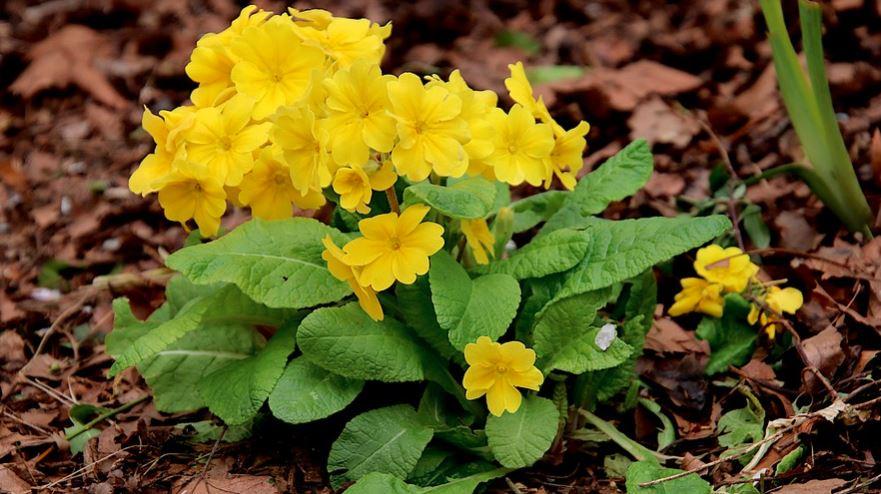 Żółte kwiaty do ogrodu