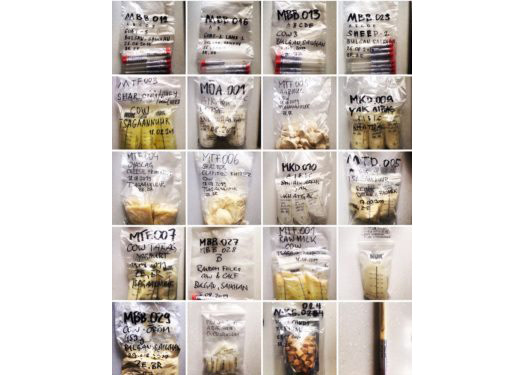02-Mongolian dairy products-1-e1580844823469