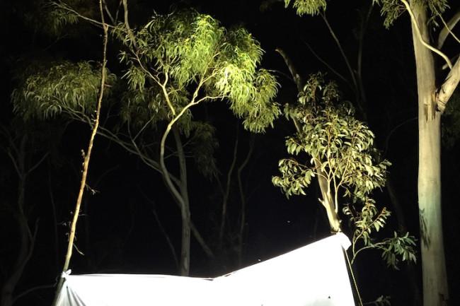 Moth-light-trap