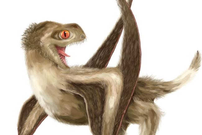 pterosaur feathers