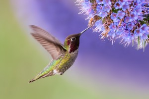 (Credit: Keneva Photography/Shutterstock)