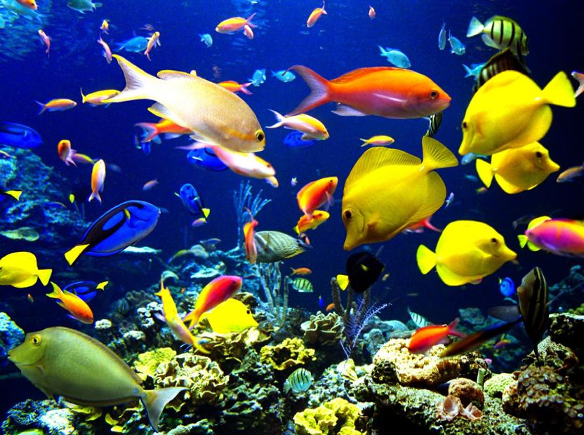 oceanlife.png