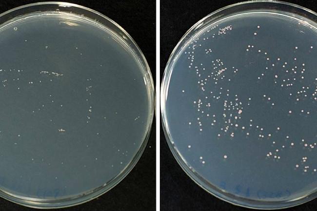 petri-dish-comparison.jpg