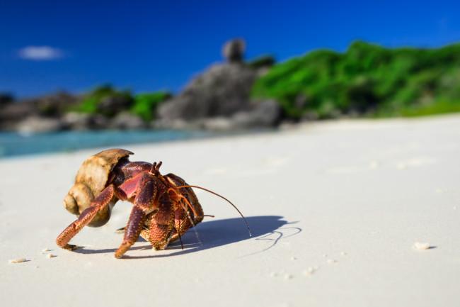 Hermit Crab - Shutterstock