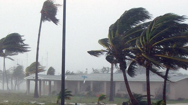 hurricane-trees.jpg