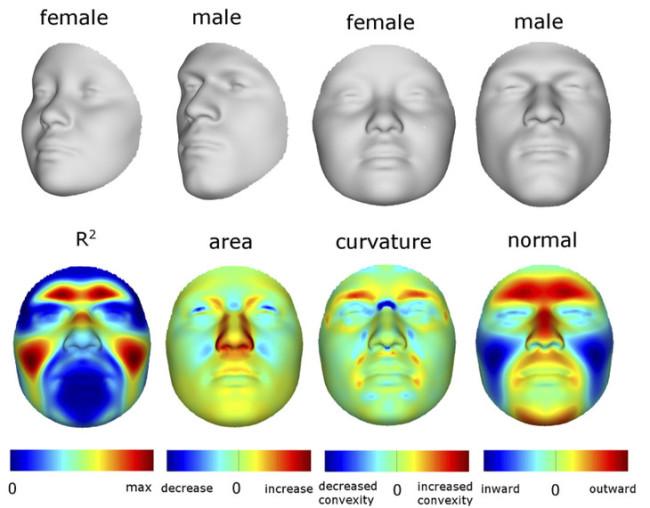 Male-Female-comparison-1.jpg