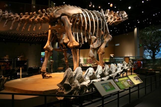 Figure-4.-Alamosaurus-sanjuanensis-at-Perot-Museum-of-Nature-and-Science.-jpg-1024x683.jpg