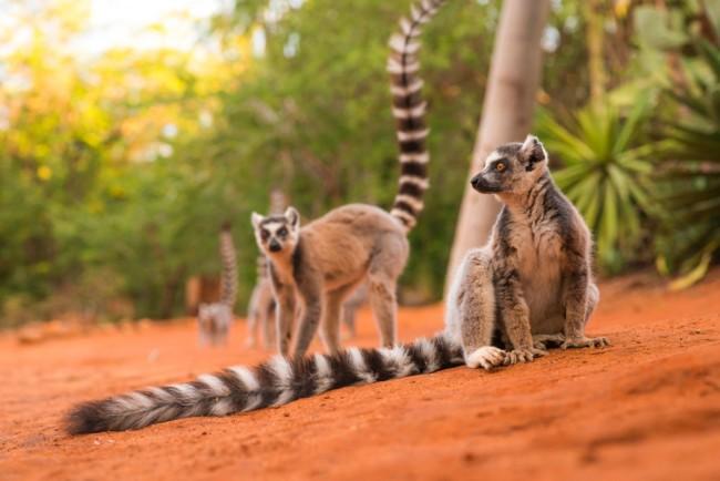 lemurs-1024x684.jpg