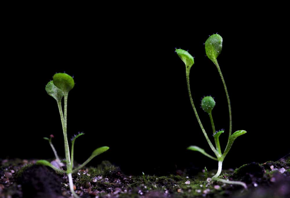 NASA Plans to Grow First Plants on the Moon