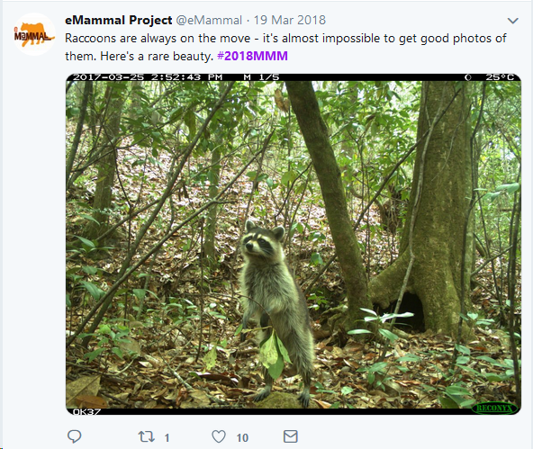 mammal1.png