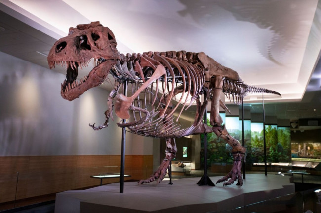 Sue the T. rex - The Field Museum