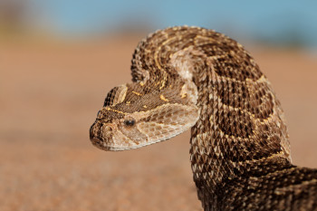 These Lab-Grown Snake Organoids Produce Real Venom