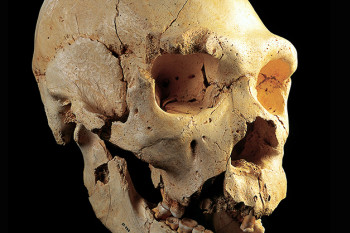Everyone Has Neanderthal DNA in Their Genome, New Genetic Analysis Shows