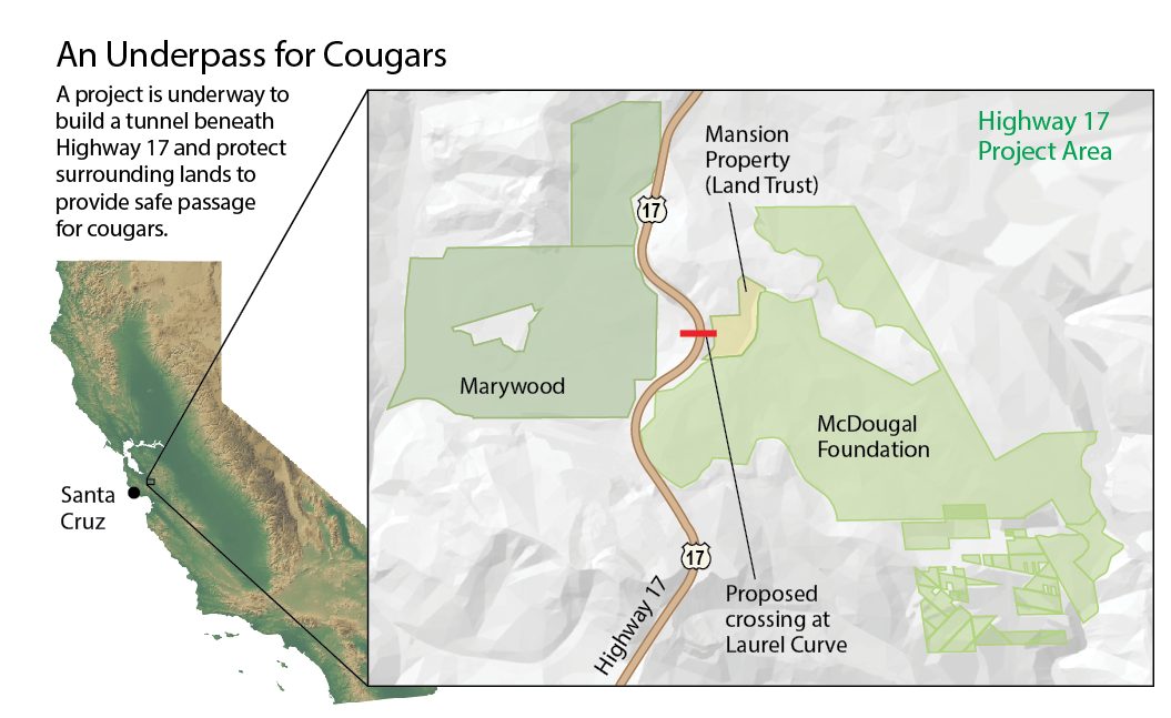 California cougar map - Jay Smith