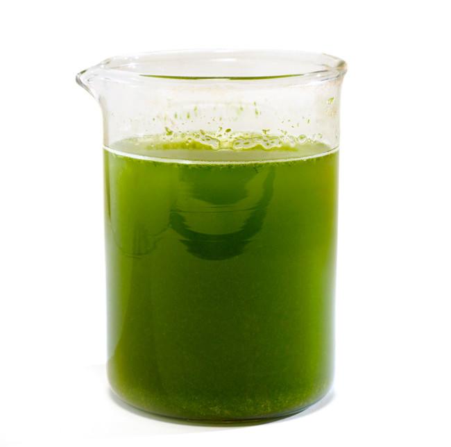 Microalgae - Science Source