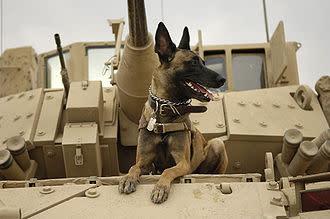 330px-Belgian_Shepherd_Malinois_on_top_of_tank.jpg