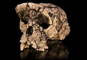 5 Skulls That Shook Up the Story of Human Evolution