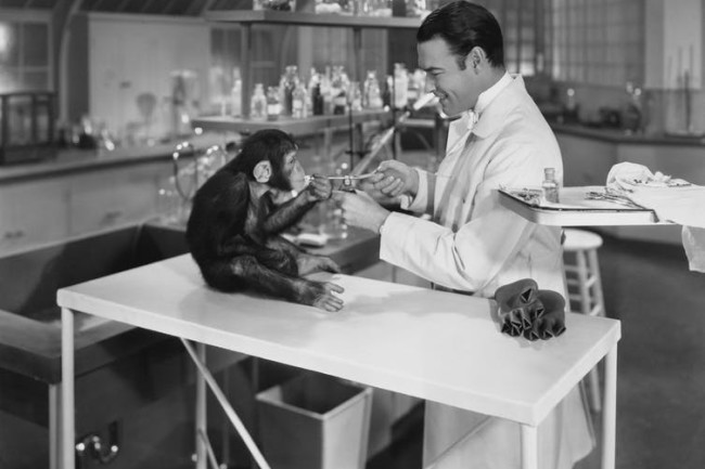 Researcher and monkey