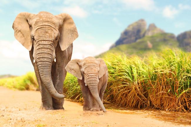 Elephants - Shutterstock