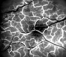 brain-blood-vessels.jpg