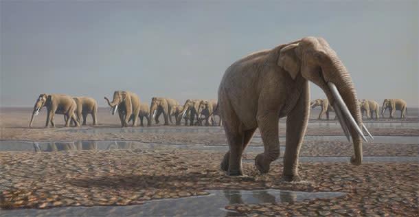 Elephant_march.jpg