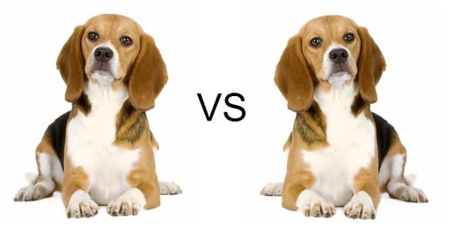 dog_left_brain.jpg