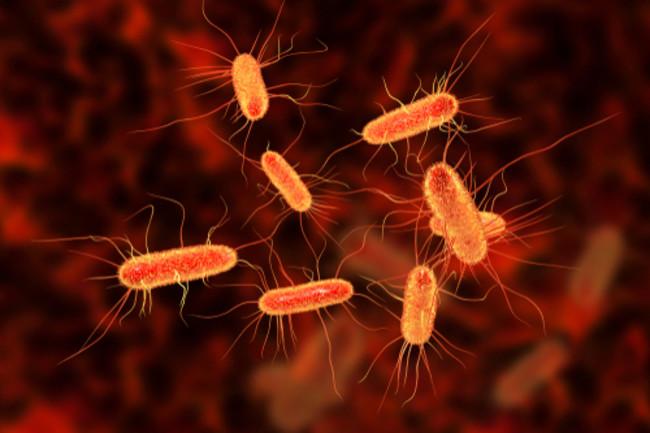 e coli geoengineering