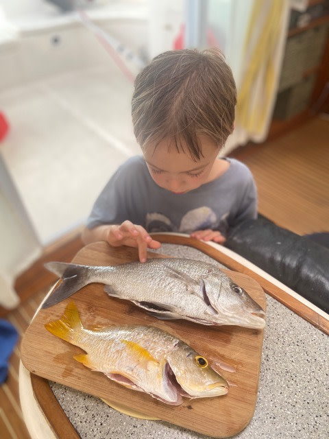Eating reef fish like snappers may cause ciguatera food poisoning - Photo by Rob Roberts