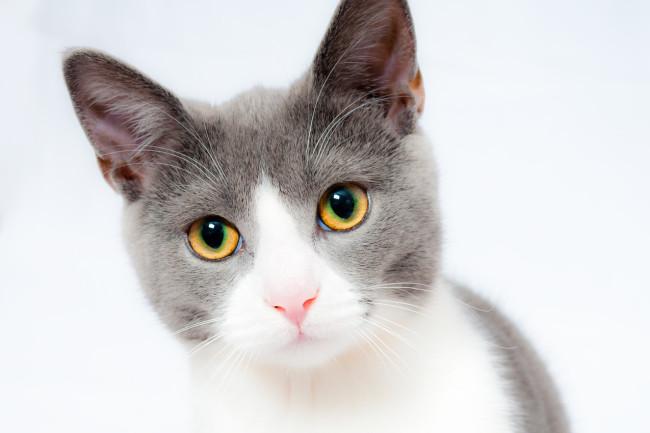 93347270 cat-1151519 1280