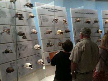 skull-wall440.jpg
