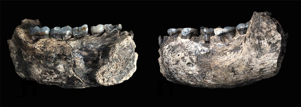 jawbone2.jpg
