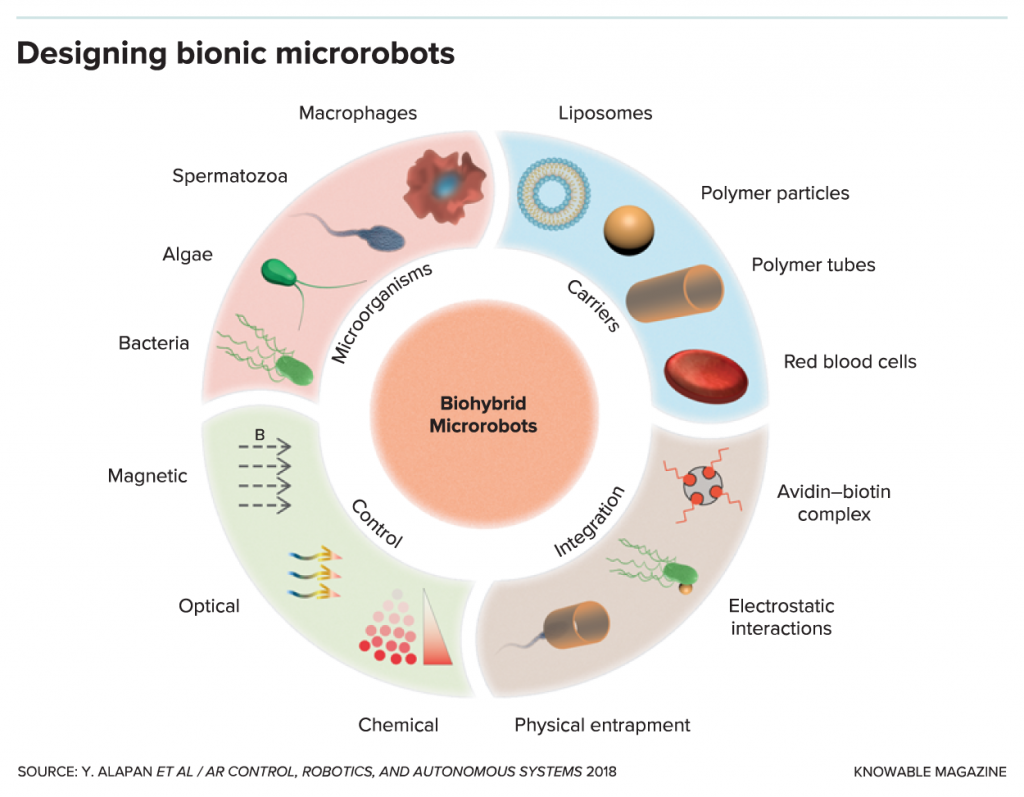 G-designing-bionic-microrobots-alt-1024x797