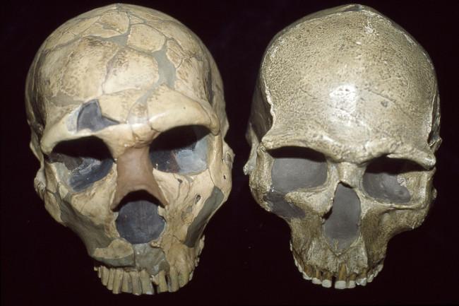 neanderthal-vs-human.jpg
