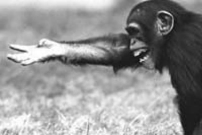 chimp-reaching.jpg