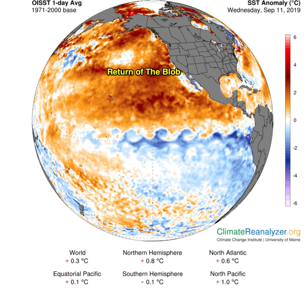 "The dreaded ""blob"" may be back in the Pacific Ocean"