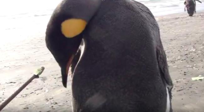 penguin-poop-stick.jpg