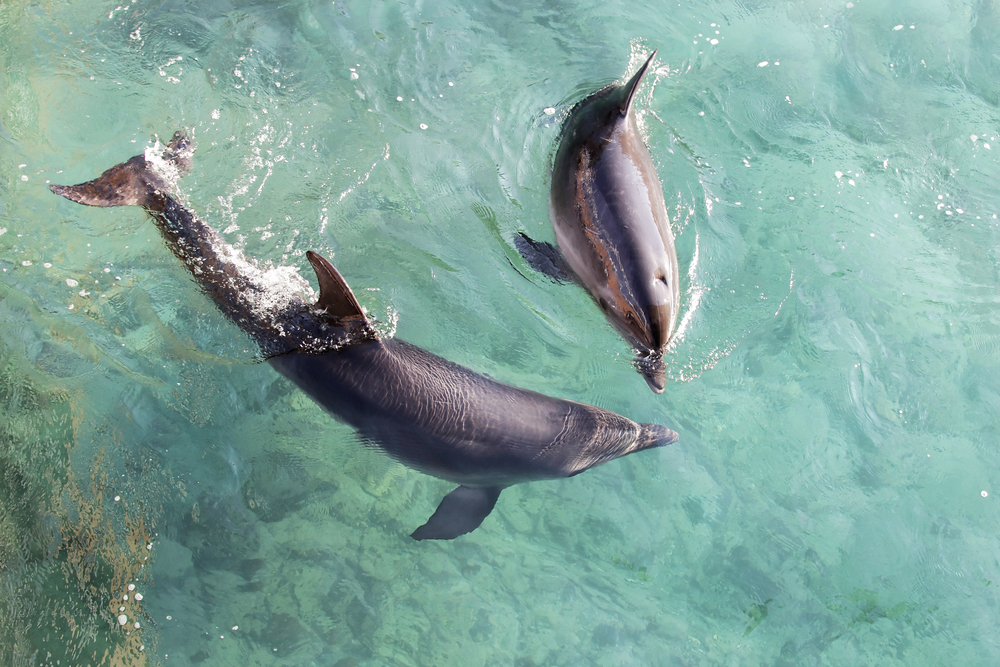 Dolphins Respond to Hearing Their Own Name