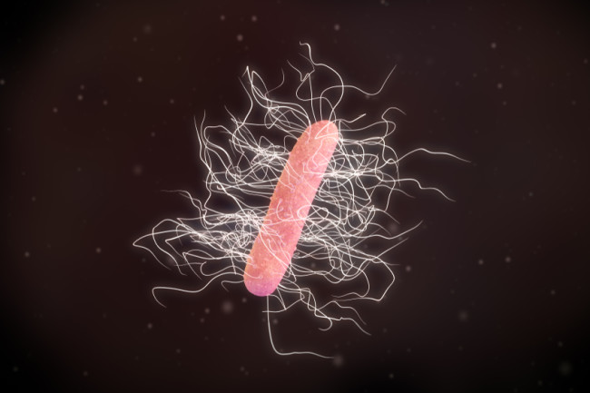 C. diff infection bacteria - shutterstock