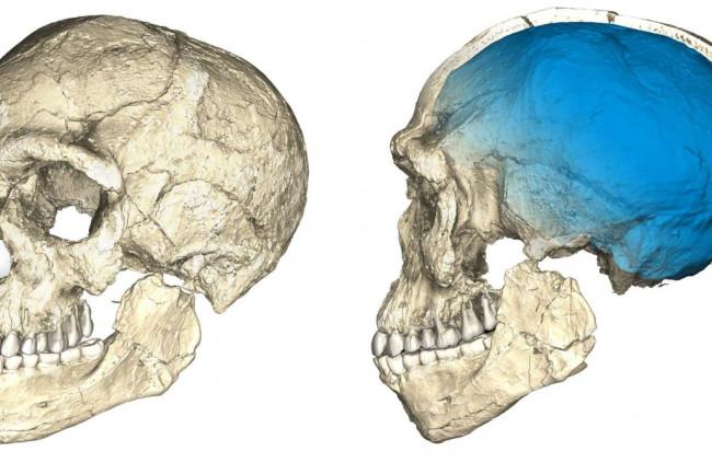 Jebel Irhoud 1. Homo Sapiens