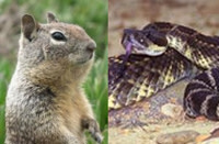 Squirrel_snake.jpg