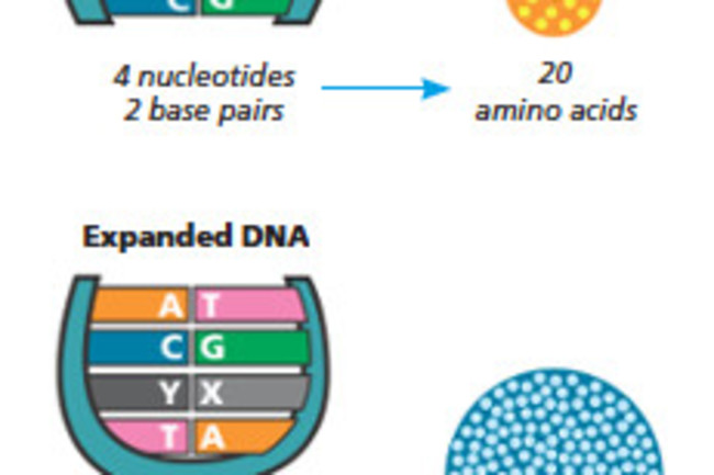 sDNA.jpg