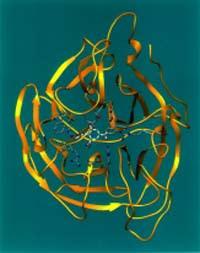 neuraminidase.jpg