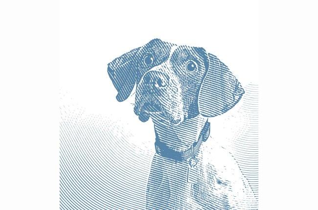 Dog stock Getty