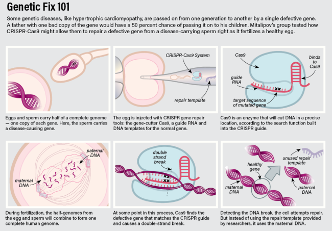Crispring Embryo - Jay Smith
