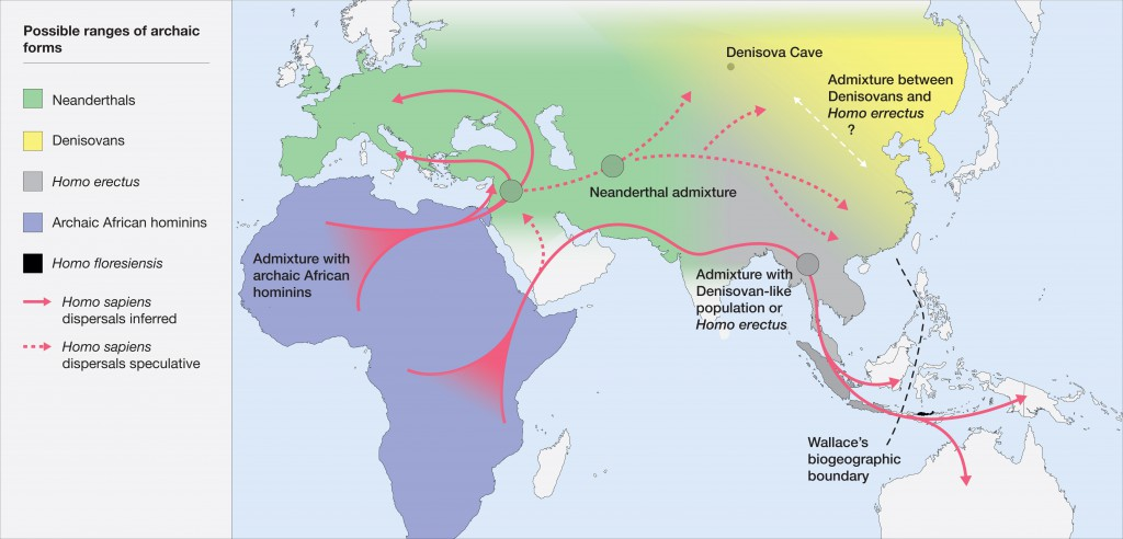 Map of the potential distribution of archaic hominins, including H. erectus, H. floresiensis, H. neanderthalenesis, Denisovans and archaic African hominins, in the Old World at the time of the evolution and dispersal of H. sapiens between approximately 300 and 60 thousand years ago. CREDIT Roberts and Stewart. 2018. Defining the 'generalist specialist' niche for Pleistocene Homo sapiens.