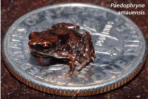 Tiniest_frog.jpg