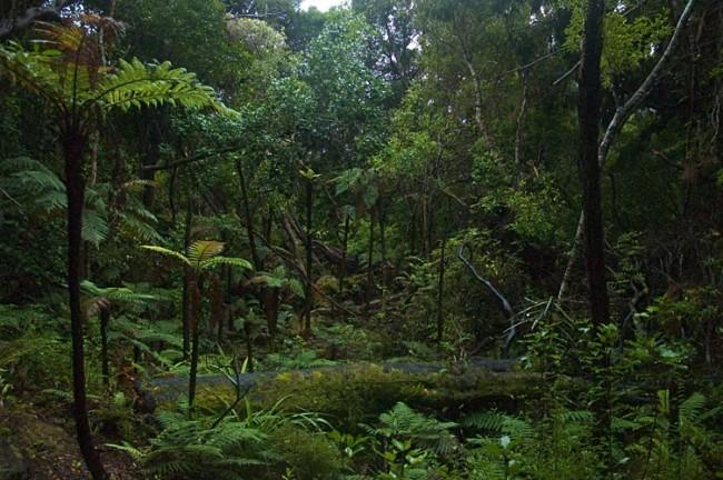 Ulva_Island_rainforest.jpeg