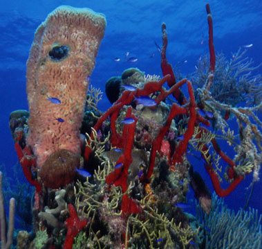 Drugs From the Sea_Reef